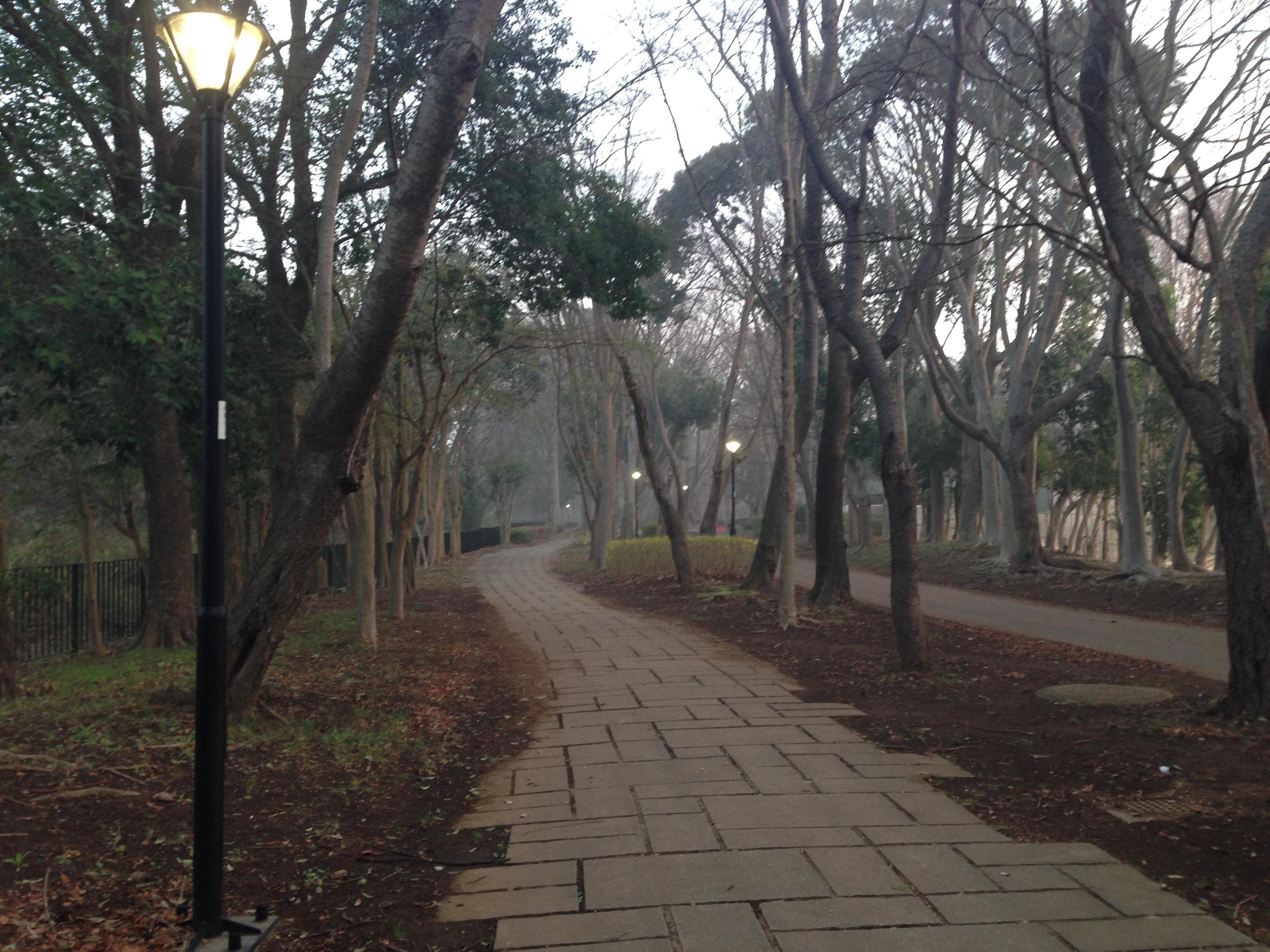 早朝の遊歩道(春)